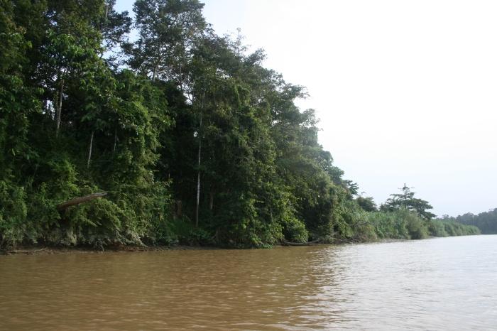 Kinabatangan River in Sabbah