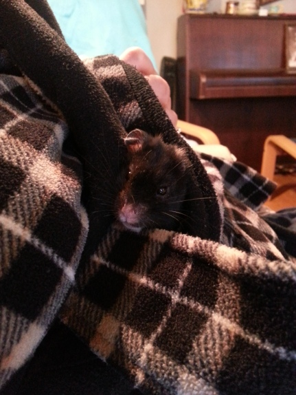 Hamie in the all-day-robe and in the back you see part of my piano