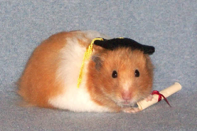 photocreds: hamsterhideout.com