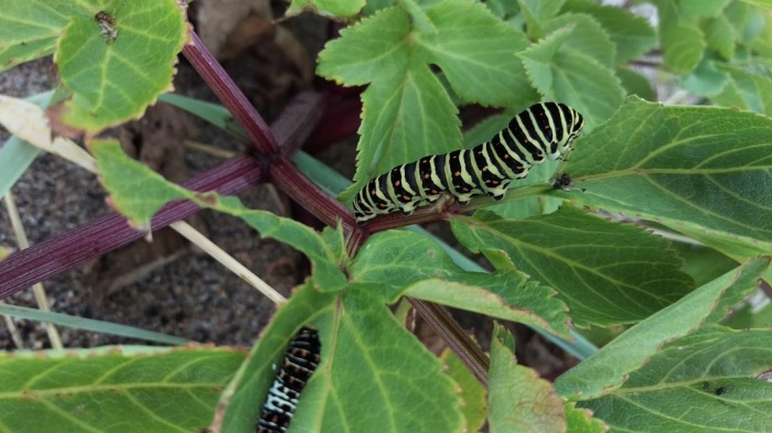 Caterpillars :)