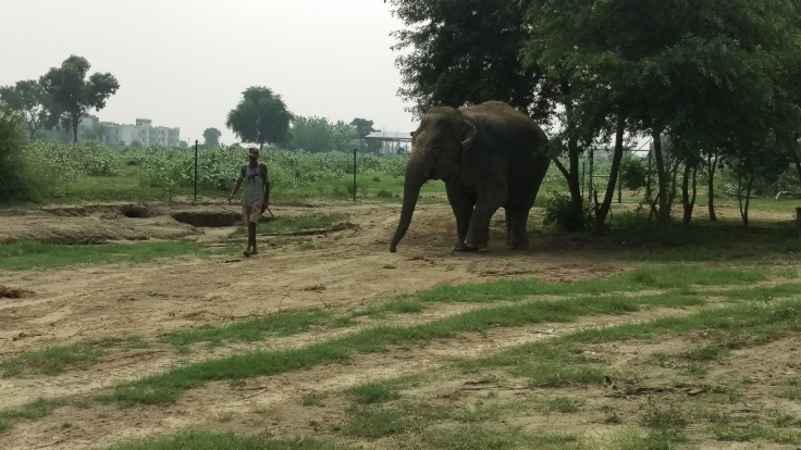 Little elephant demanding attention or food to move another cm.