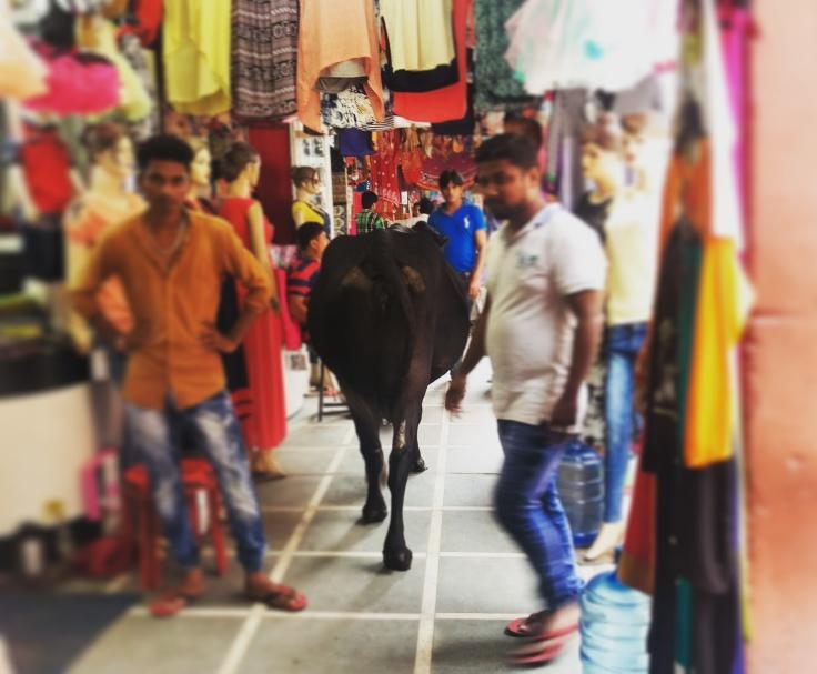 A cow walking through the bazaar.