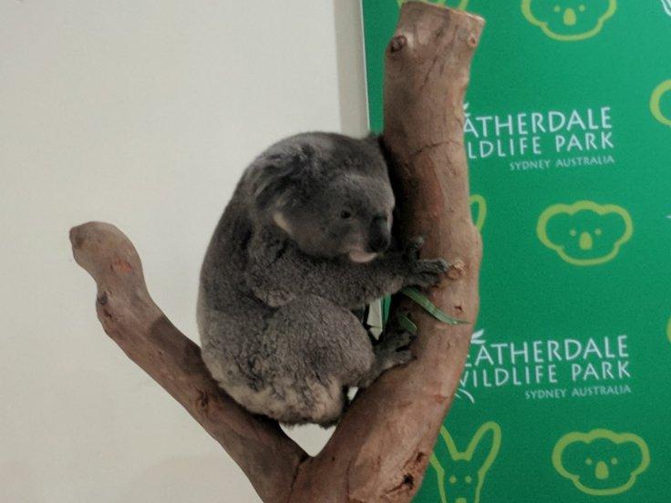 Brekkies with a koala